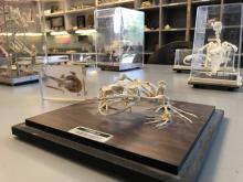 Various Animal Skeletons